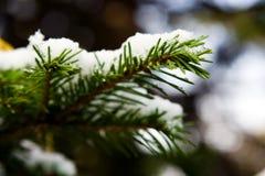 Tannenzweig im Schnee Lizenzfreies Stockbild