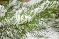 Tannenzweig mit dem Schnee Stockbilder