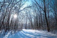 Tannenzweige im Wald bedeckt mit Schnee Lizenzfreies Stockfoto