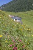 Tanneralm im Benediktenwand-Bereich Stockfotografie