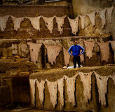 Tanneries in Fez Royalty Free Stock Photography