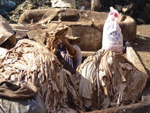 Tannery in Marrakech Morocco. Worker handling hides at a tannery in Marrakech, Morocco Royalty Free Stock Photo