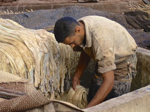 Tannery worker in Marrakech. Worker handling hides at a tannery in Marrakech, Morocco Stock Photography