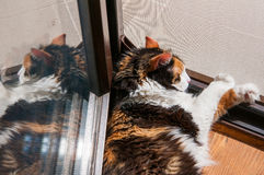 Tanning cat. At a door entrance Royalty Free Stock Photography