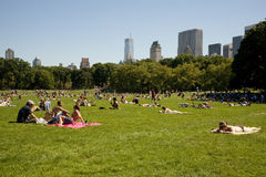 Tanning in Central Park Stock Image