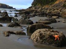 Tanning dos Starfish Fotos de Stock