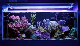 Tanque do aquário do recife de corais Imagem de Stock