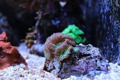 Tanque do aquário do recife de corais Fotografia de Stock Royalty Free
