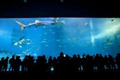 Tanque principal de Okinawa Aquarium fotos de stock