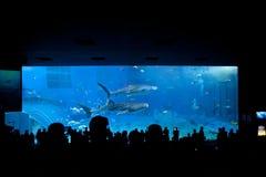 Tanque principal em Okinawa Aquarium imagem de stock royalty free