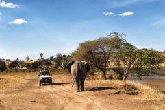 Tansania-Safari lizenzfreies stockbild