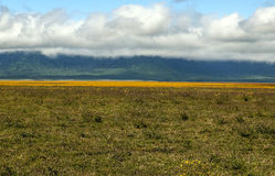Tansania-Wiesen lizenzfreies stockfoto