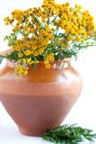 Tansy in a clay pot. Summer herbs Royalty Free Stock Image