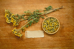 Tansy. Dried. Herbal medicine, phytotherapy medicinal herbs. Stock Photography