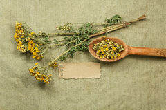 Tansy. Dried herbs. Herbal medicine, phytotherapy medicinal herb Royalty Free Stock Photos
