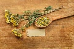 tansy Erbe secche Medicina di erbe, erba medicinale di fitoterapia Immagine Stock