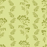 Tansy flowers pattern Stock Photos