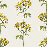 Tansy flowers pattern Stock Image