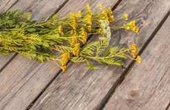 Tansy on a wooden background. Stock Photo