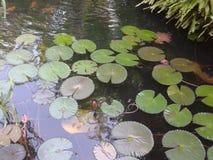 Tant de feuilles à la piscine à Sanya Images stock