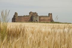 Tantallon castle framed by fields. Tantallon castle framed by yellow fields out of focus Stock Photo
