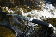 Tanto knife in water Stock Image