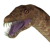 Tanystropheus Dinosaur Head Royalty Free Stock Images