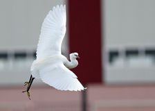 Tanz Birding lizenzfreie stockbilder