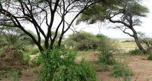 Tanzańczyka krajobraz Fotografia Stock