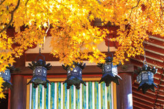 Tanzan Shrine at fall Stock Photography