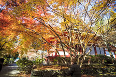 Tanzan Shrine at fall for adv or others purpose use Royalty Free Stock Photography