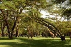 Tanzania Fotografia Stock