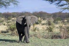 tanzania photos libres de droits
