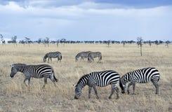 tanzania Imagen de archivo