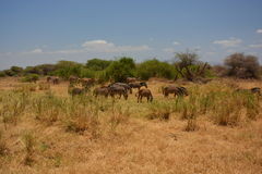 Tanzania , Africa, Wildlife Stock Photography