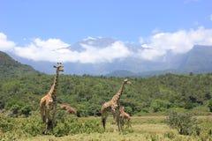 Tanzania , Africa, Wildlife Stock Image