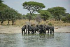 Tanzania Afrika, djurliv Royaltyfri Fotografi