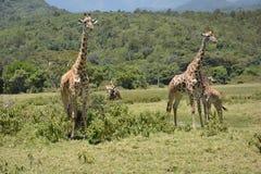 Tanzania Afrika, djurliv royaltyfri foto