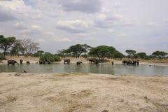 Tanzania, Afryka, przyroda Zdjęcia Stock
