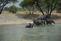 Tanzania, Afryka, przyroda Fotografia Stock