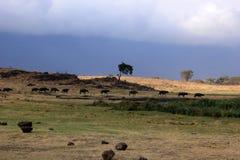 Tanzania, Afryka, przyroda Obraz Royalty Free