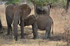 Tanzania, Afryka, przyroda Zdjęcia Royalty Free