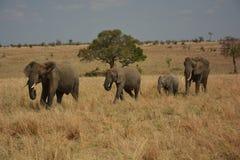 Tanzania, Afryka, przyroda Obrazy Stock