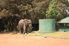 Tanzania, Afryka, przyroda Zdjęcie Royalty Free