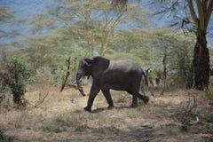 Tanzania, Afryka, przyroda Obraz Stock