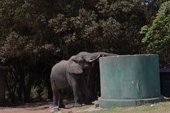 Tanzania, Afryka, przyroda Obrazy Royalty Free