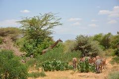 Tanzania, Afryka, przyroda Zdjęcie Stock