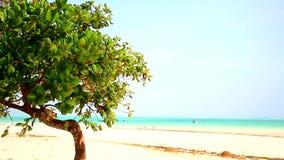 Tanzania beach stock video footage