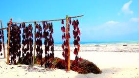 Tanzania beach stock footage