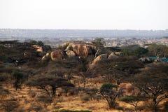 Tanzania kopje Royalty Free Stock Photography